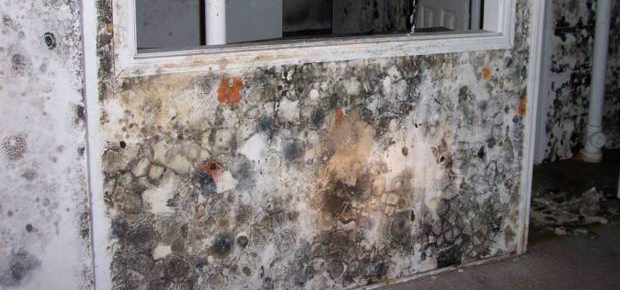 Mold Remediation - Orange County Mold Removal | Gregory Restoration